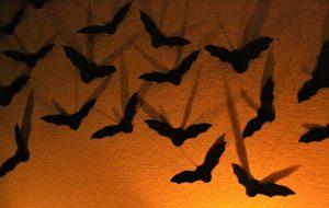 morcegos9